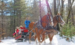 Horse-drawn sleigh ride at Purity Spring Resort