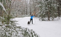 Cross country skier and a dog on a trail
